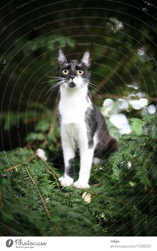 Thelma alone in the forest. Nature Sunlight Spring Summer Autumn Foliage plant Wild plant Yew Coniferous trees Garden Park Forest Pet Cat Animal face 1