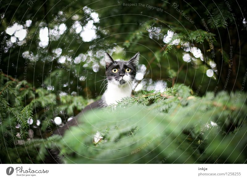 Mommy..... ...? Lifestyle Leisure and hobbies Nature Spring Summer Plant Tree Foliage plant Yew Coniferous trees Garden Park Forest Animal Pet Cat Animal face 1