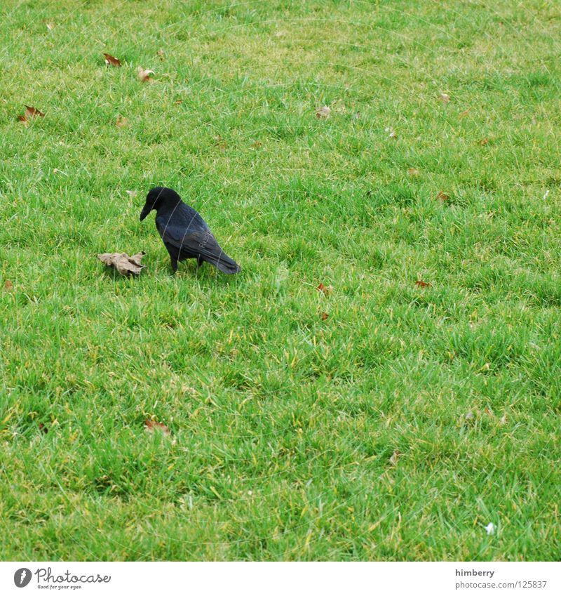 Nature Animal Meadow Grass Garden Park Bird Aviation Lawn Living thing Disaster