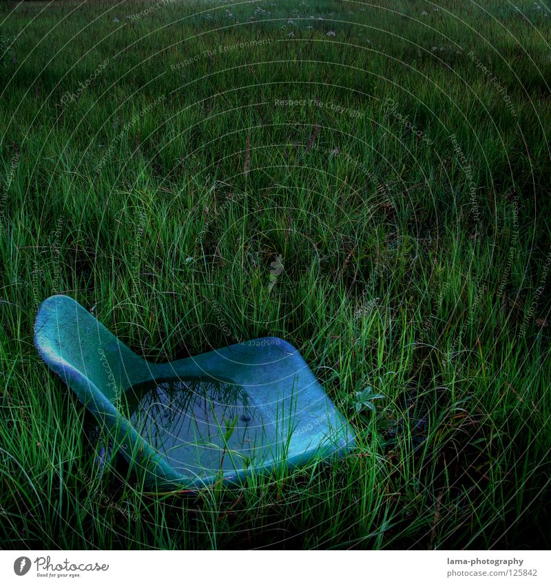 Water Old Green Blue Plant Meadow Grass Lake Rain Coast Dirty Environment Wet Earth Places