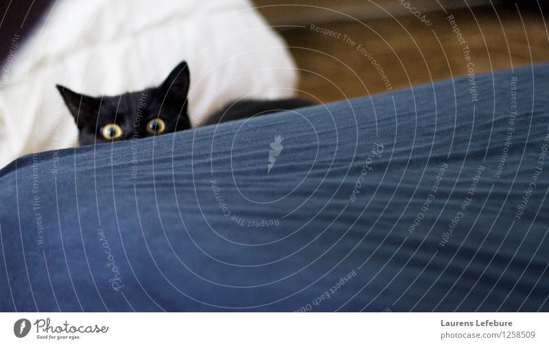 Human what are you doing there? Cat Beautiful Black Baby animal Funny Playing Think Observe Threat Cute Creepy Hide Pet Animal face Black-haired Magazine