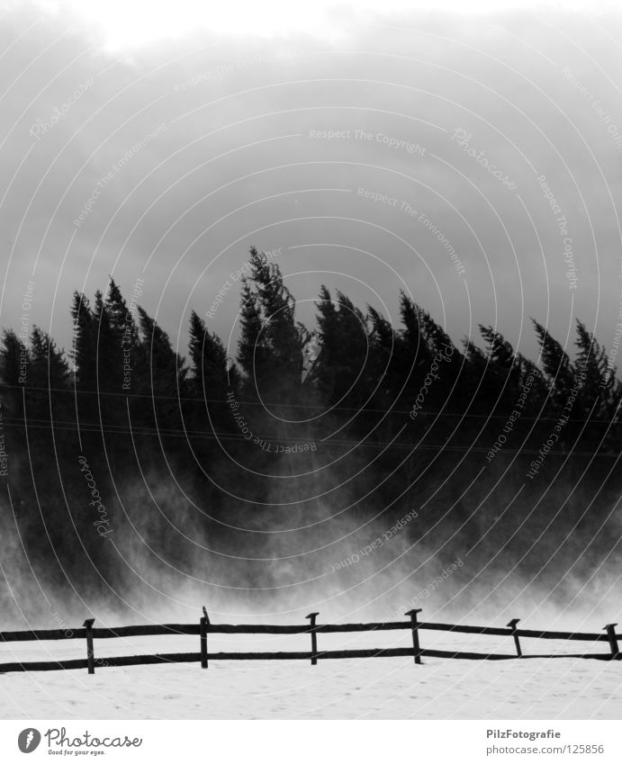 Emma Gale Tree Fence Black White Crooked Extreme Storm Wood Broken Tumble down Dangerous Fear of death Point Treetop Clouds Black & white photo Panic Wind Bend