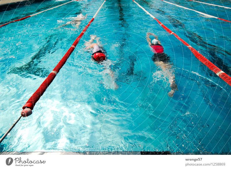 two-way traffic Sports Aquatics Sportsperson Sporting event Triathlon Swimming Swimming & Bathing Swimming pool Human being Masculine 3 Group Fitness Athletic