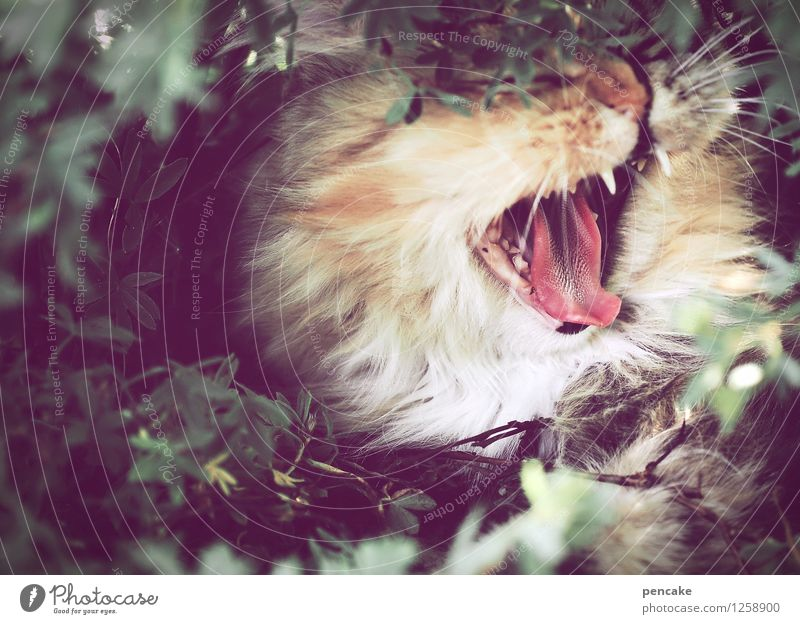 There's something in the bush! Summer Bushes Garden Park Animal Pet Cat Animal face 1 Sign Lie Scream Emotions Loneliness Exhaustion Horror Dangerous Stress