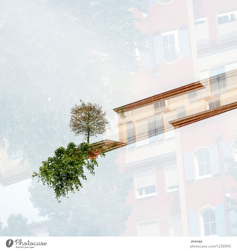 Nature Plant Tree Style Bright Design Living or residing Modern Bushes Esthetic Perspective Uniqueness Terrace