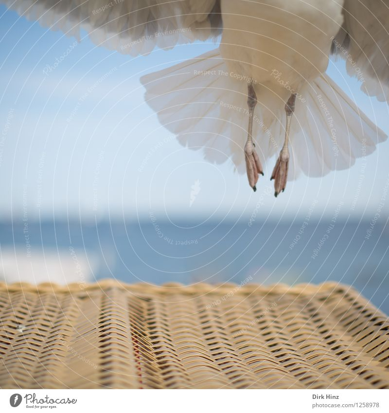 vertical take-off plane Environment Nature Sky Animal Bird Wing 1 Flying Vacation & Travel Esthetic Elegant Free Tall Maritime Natural Blue Brown Gray Dangerous