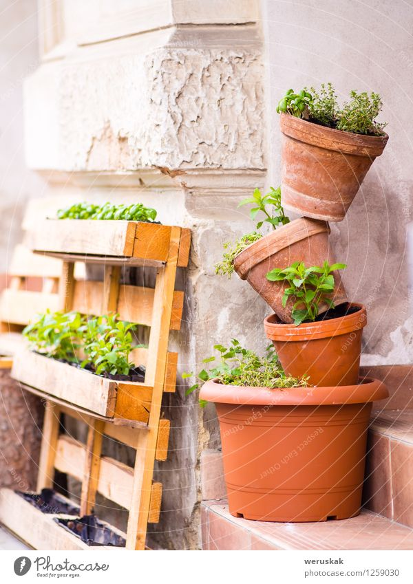 Mini gardening - several pots with plants stacked Plant Green Flower Environment Spring Grass Small Garden Contentment Leisure and hobbies Decoration Growth