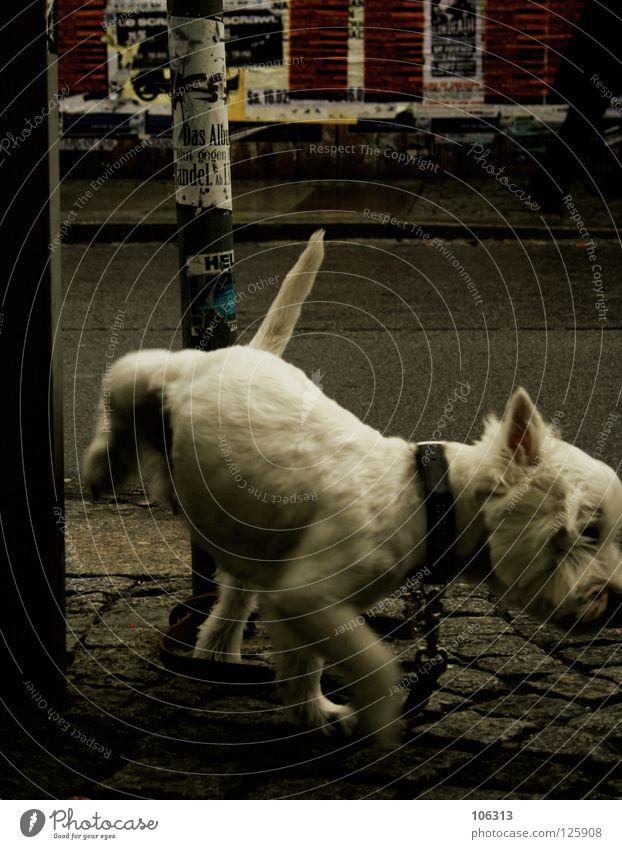 White City Loneliness Animal Street Dog Rain Dance Small Hope Dresden Chain Mammal Pet Loyalty Urinate