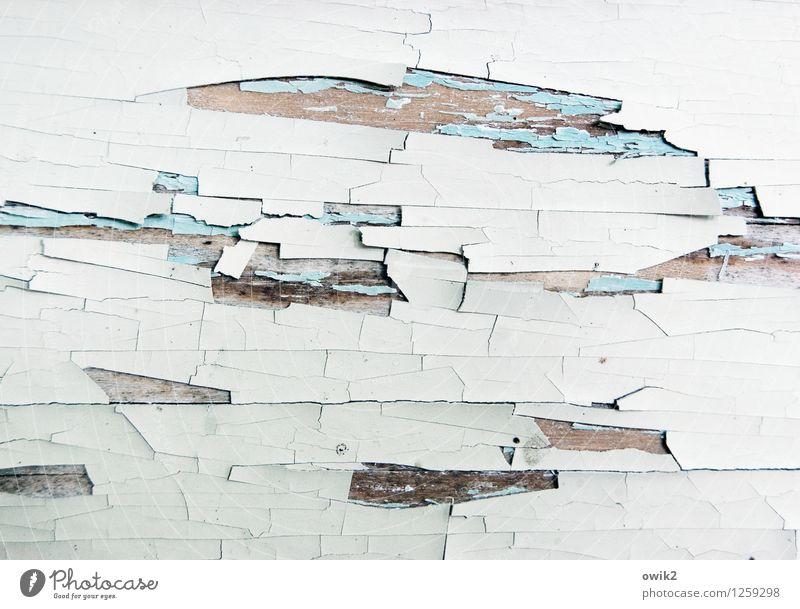 contemporary events Wood Old To dry up Transience Destruction Ravages of time Flake off Tracks Paint traces Dye White Exterior shot Close-up Detail Abstract