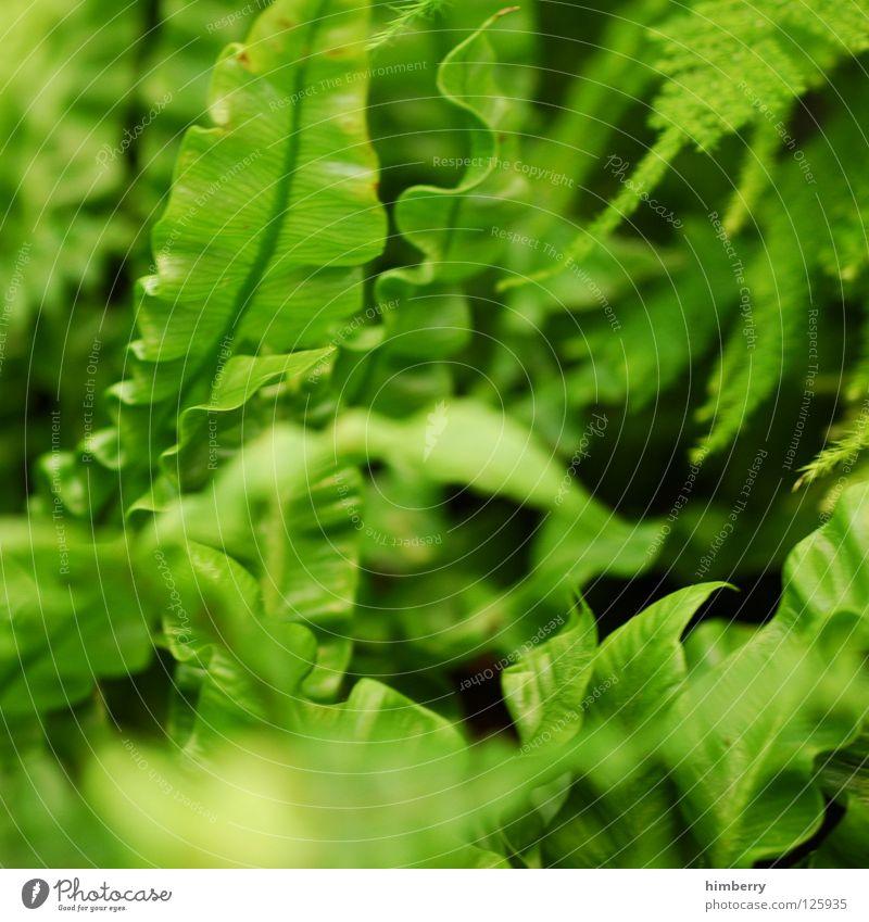 Nature Vacation & Travel Green Colour Leaf Spring Line Park Background picture Fresh Virgin forest Botany Vessel Florida Color gradient
