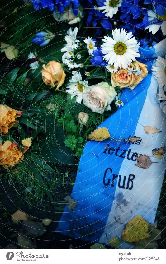One last greeting Cemetery Flower Grave Funeral Death Jewellery Ledger Wreath Flower wreath Flower arrangement Leaf Autumn White Rose Coffin Calm Grief Distress