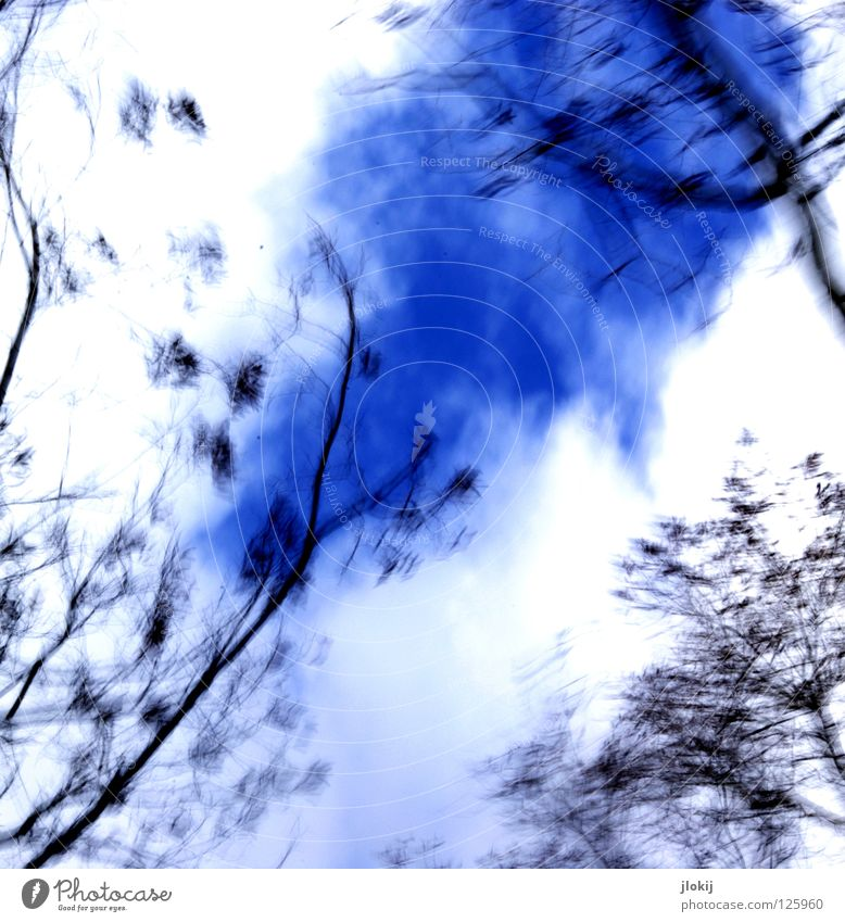 Nature Sky White Tree Blue Plant Winter Clouds Movement Park Art Wind Growth Gloomy Branch Painting (action, work)