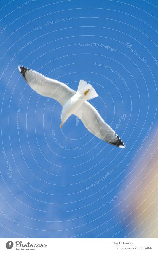 Sun Joy Summer Ocean Vacation & Travel Freedom Bird Flying Wing Seagull