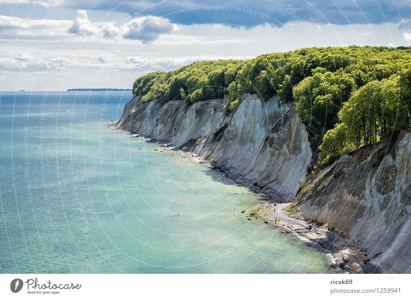 chalk cliffs Relaxation Vacation & Travel Nature Landscape Clouds Tree Coast Baltic Sea Ocean Tourist Attraction Blue Romance Idyll Tourism Environment