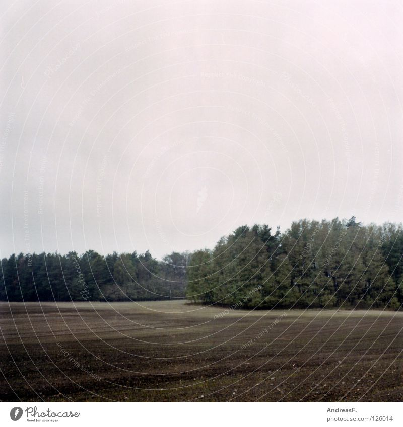 november Forest Edge of the forest Field Rural Medium format Agriculture Plow Autumn Gray Rain October November Americas Province Sand Earth Nature