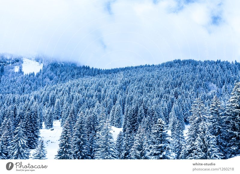 bitter Forest Cold Snow Powder snow Tourism Love of winter Winter Snowscape Winter's day Hill Nature Coniferous forest Christmas tree Christmas trees