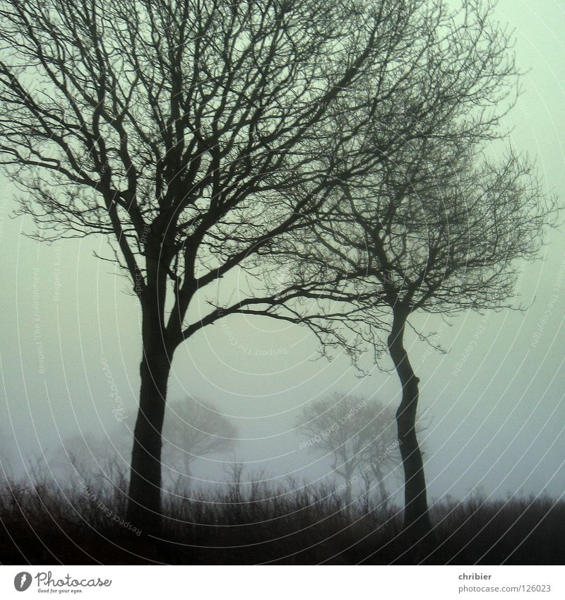Sky Tree Winter Black Grass Landscape Together Field Small Fog Weather Large Protection Branch Strong Motoring