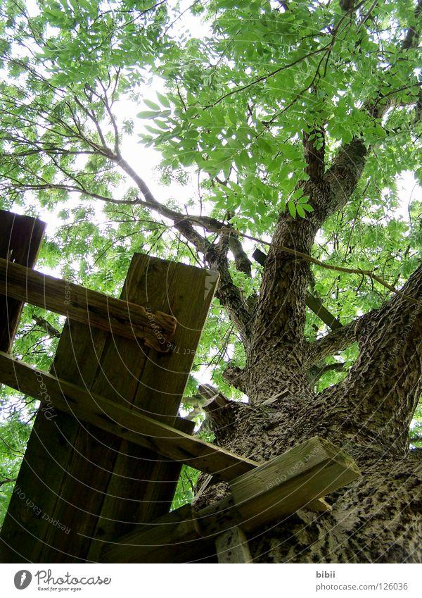Old Plant Green Beautiful Tree Relaxation Loneliness Leaf Wood Tall Dangerous Branch Broken Tree trunk Derelict Wooden board