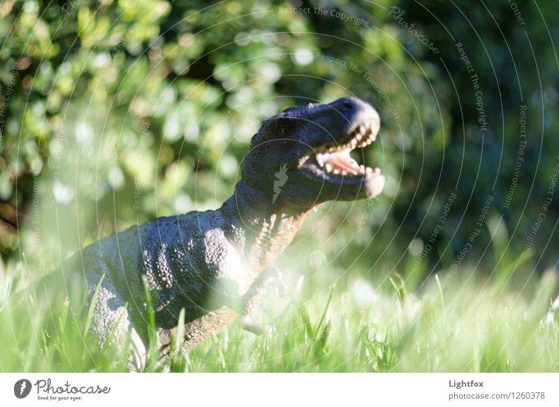 Green Animal Clock Wild animal Success Dangerous Threat Hunting Tourist Attraction Scream Zoo To feed Company Fight Wilderness Feeding
