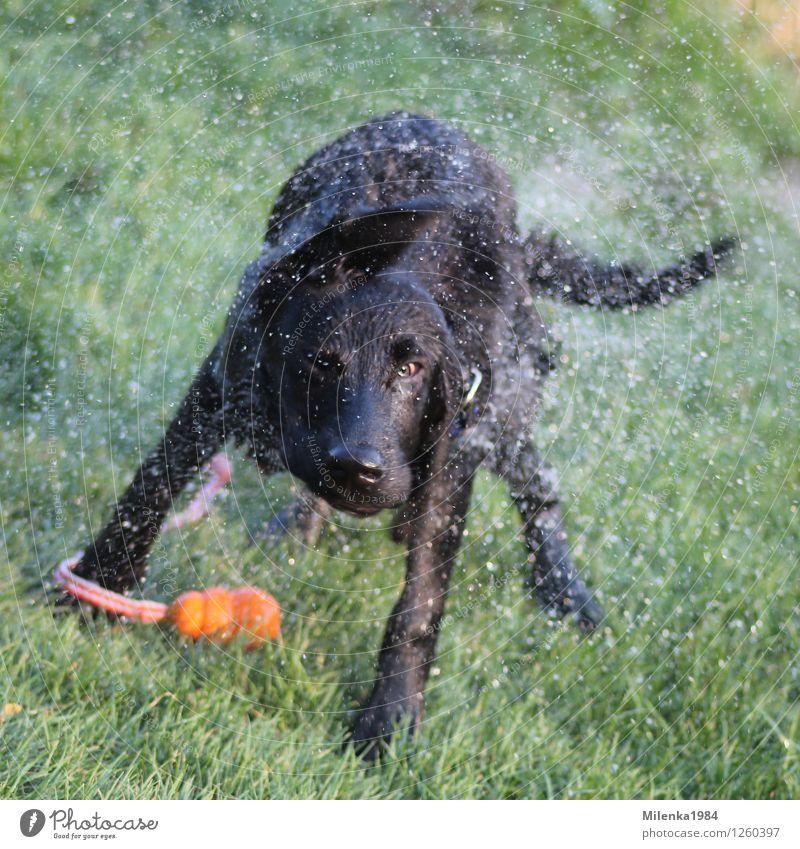 Dog Nature Animal Joy Meadow Garden Park Wild Beautiful weather Adventure Pet Labrador Shake