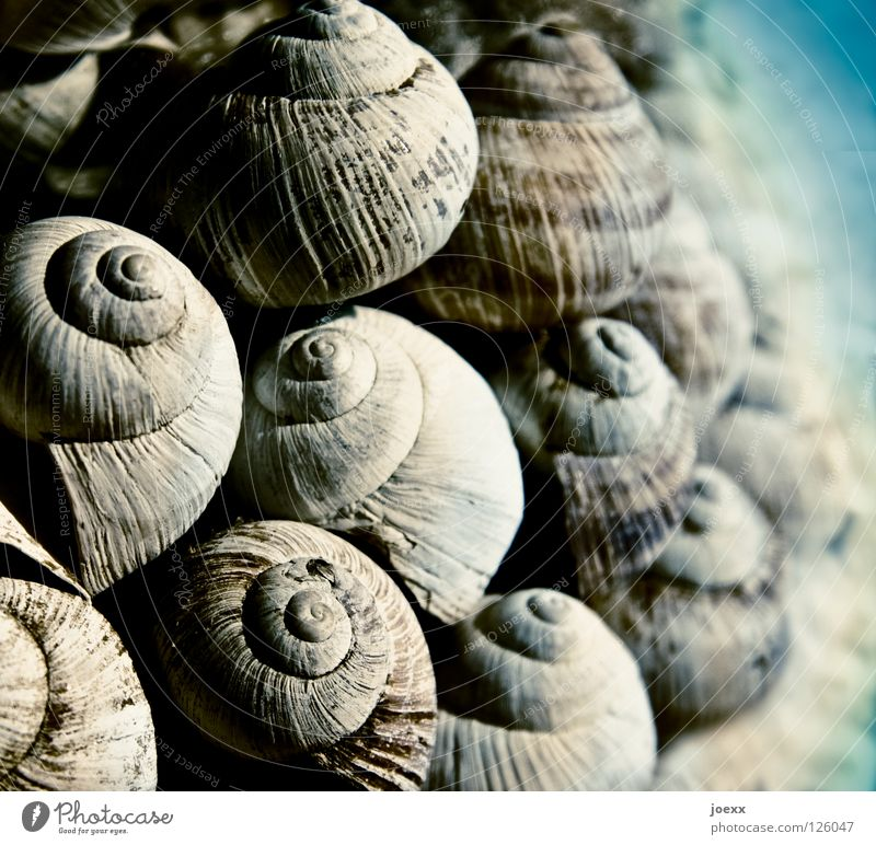 group snuggling Accumulation Decoration Embellish Rotate Rotation Narrow Rotated Stack Heap Cockle Lime Cuddling Coast Ocean Mussel Collection Sand Lake Summer