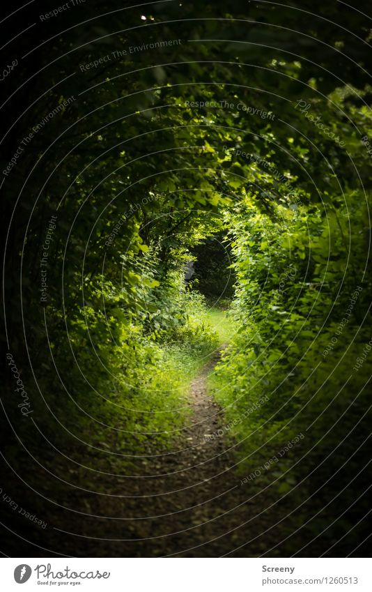 Nature Plant Green Summer Tree Landscape Calm Forest Grass Lanes & trails Idyll Hiking Bushes Discover Jinxed