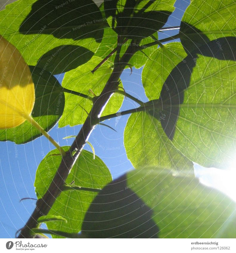 first spring fever Leaf Green Rachis Beautiful weather Flower Window board Translucent Colour Spring Blue Sky Sun vernally Lighting Twig good mood yellow leaf