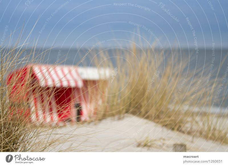 vacation Beach chair Vacation & Travel Baltic Sea Lake Ocean Water Body of water Sand Sandy beach Beach dune Common Reed Grass Green Summer Red White Striped