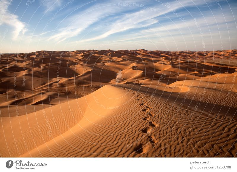 Traces in the sand Nature Landscape Sand Desert Exceptional Elegant Exotic Fantastic Far-off places Hot Above Dry Moody Romance Beautiful Purity Humble Longing