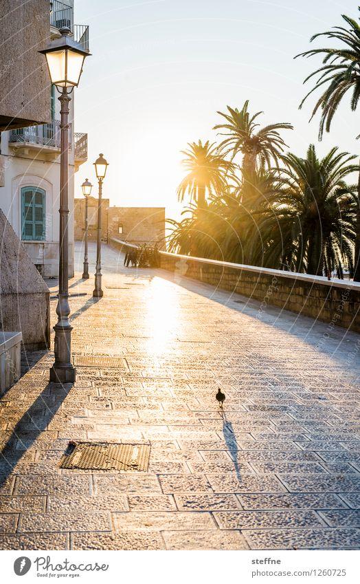 Vacation & Travel Summer Calm Idyll Italy Beautiful weather Lantern Palm tree Town Apulia