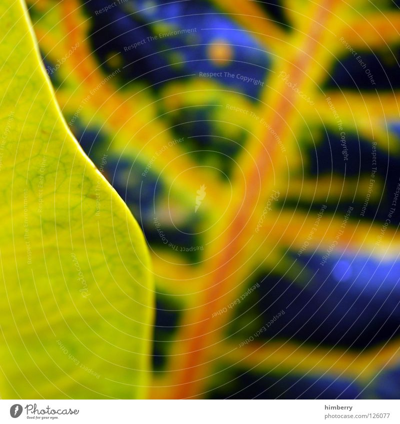 folding leaf Leaf Green Nature Florida Botany Virgin forest Tropical Background picture Park Macro (Extreme close-up) Detail Structures and shapes