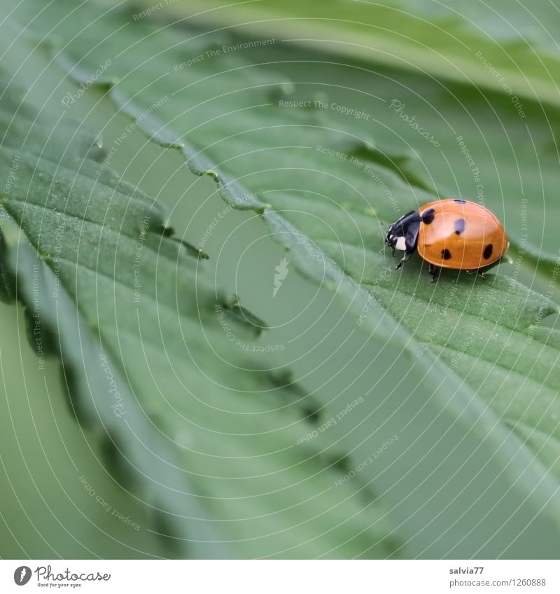 Hemp in happiness Plant Animal Summer Grass Leaf Foliage plant Agricultural crop Wild animal Beetle Ladybird Insect 1 Touch Relaxation To enjoy Crawl Sit Hiking