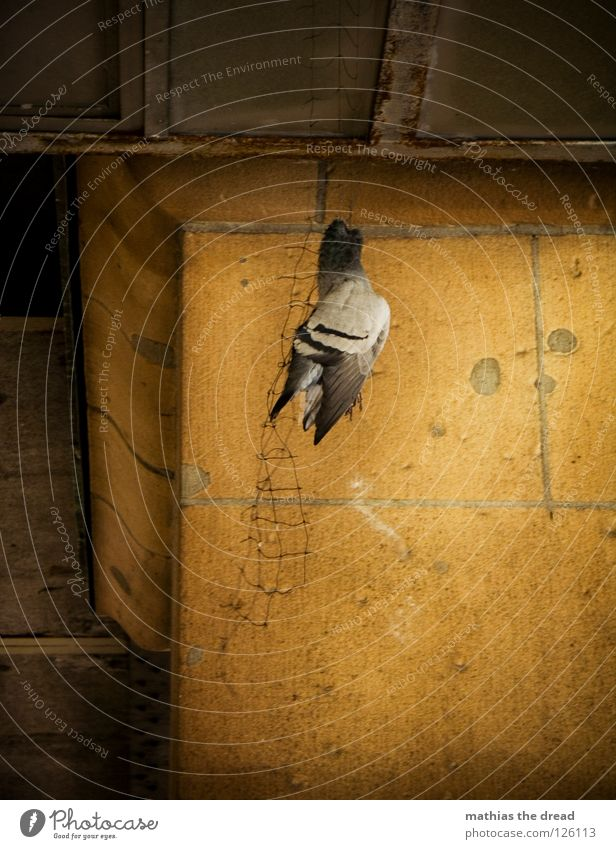 Animal Dark Death Wall (building) Sadness Think Bird Arm Tall Bridge Wing Transience Grief Protection Living thing Net