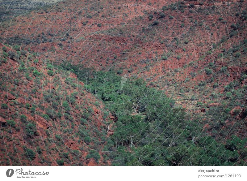 Kings Canyon Gorge from above. Northern Territory. Australia. With green trees and red rocks. Happy Contentment Leisure and hobbies Trip Summer Environment