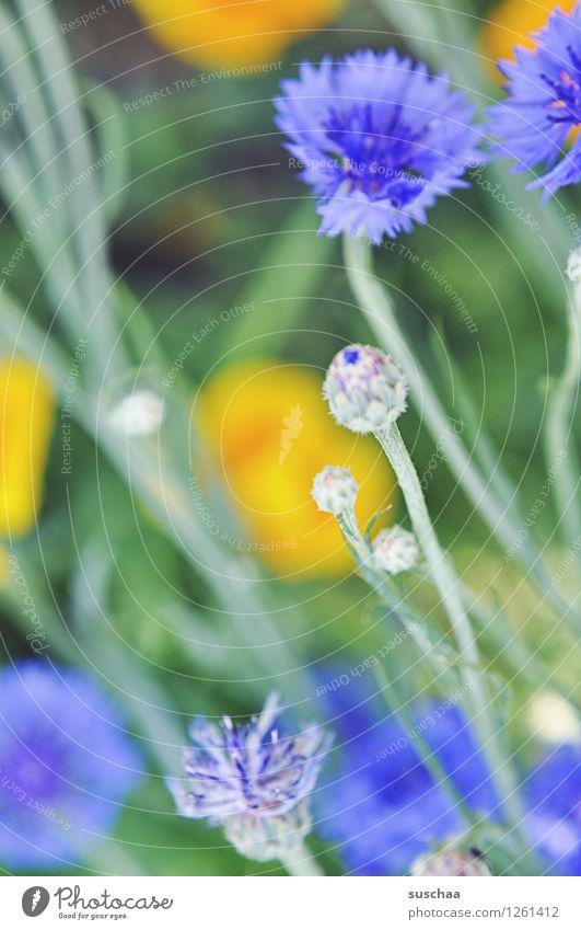 oh a flower photo Nature out Garden do gardening flowers Summer cornflowers Grass blossoms