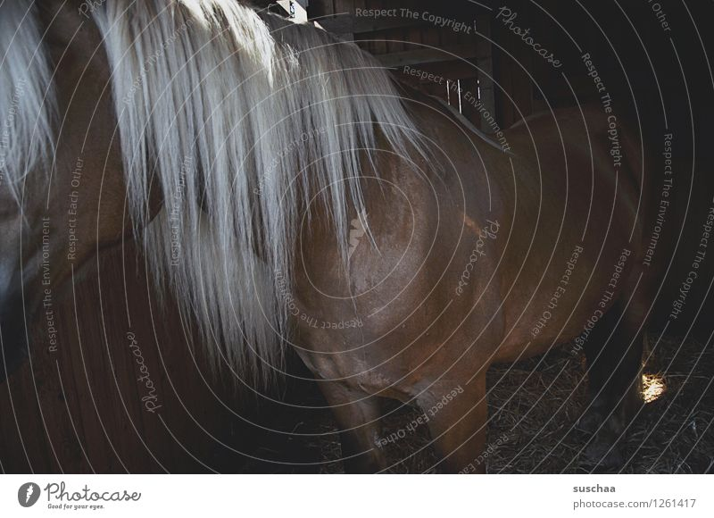 horse in stable Horse Pony Stable Mane Farm pony farm Hair and hairstyles