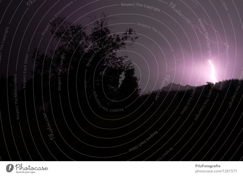 First comes the lightning Thunder and lightning Lightning Tree Forest Mountain Peak Violet Black Apocalyptic sentiment Threat Colour photo Exterior shot