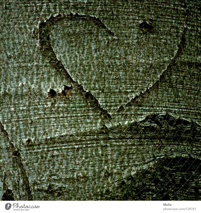 Tree Love Couple Friendship Graffiti Heart Sign Symbols and metaphors Tree trunk Relationship Furrow Half Tree bark Matrimony Mural painting