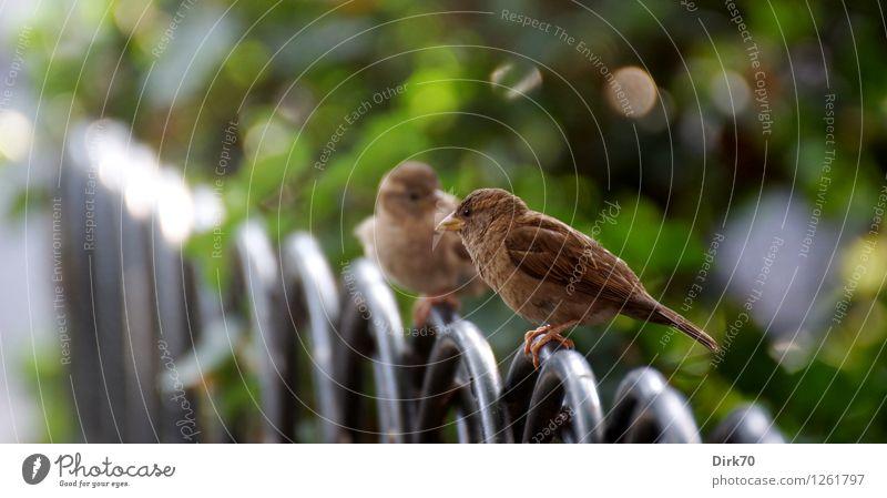 Big-city spats in conversation Nature Summer Bushes Garden Park New York City Manhattan USA Town Fence Garden fence Lanes & trails Animal Wild animal Bird