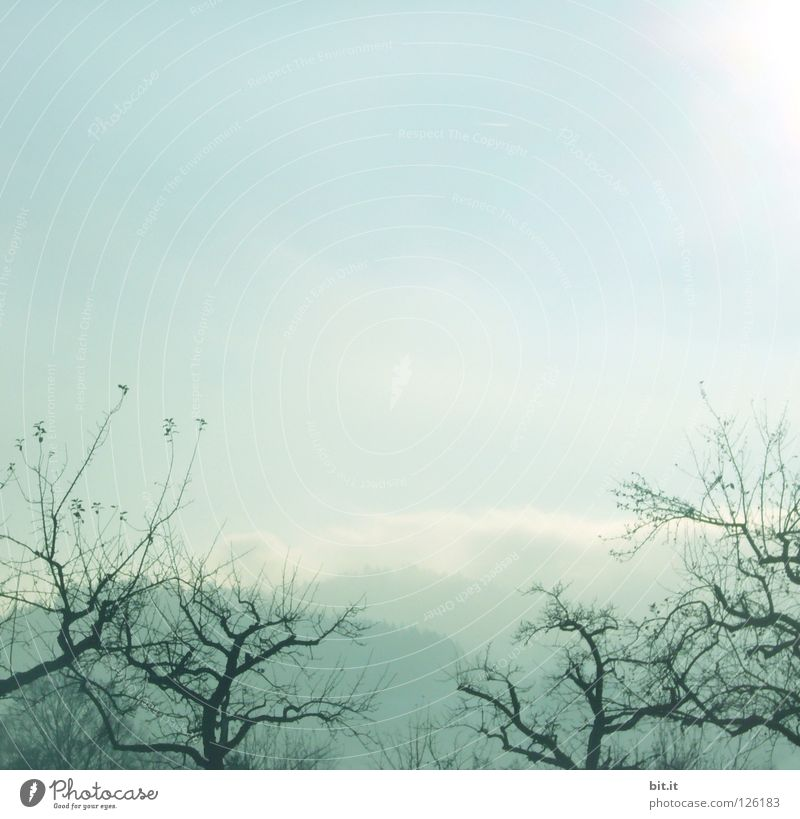 BOSCOP IN JAPAN Tree Fog Sky Winter Cold Headstrong Market garden Foreground Background picture Soft Delicate Blown away Sanddrift Warped Fir tree Forest