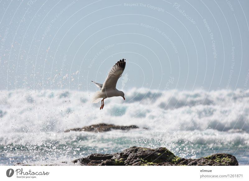 Nature Blue Water White Animal Movement Coast Freedom Flying Bird Rock Dream Fresh Elegant Waves Power