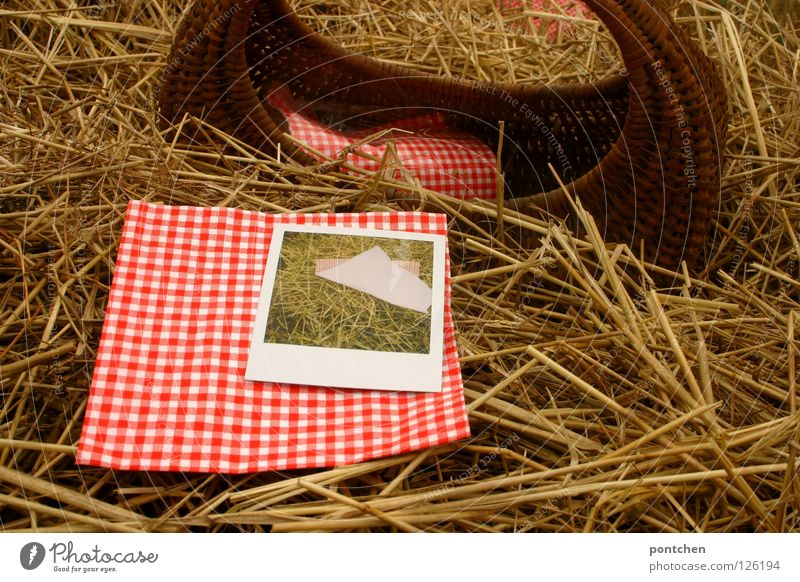 Basket and red-white checked napkin and polaroid in straw Vacation & Travel Trip Summer Nature Autumn Agricultural crop Red White Idyll Break Straw Hay Napkin