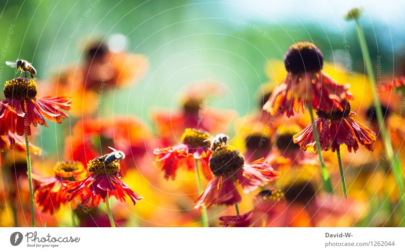 Nature Plant Summer Sun Flower Red Landscape Animal Environment Spring Blossom Garden Flying Work and employment Park Weather