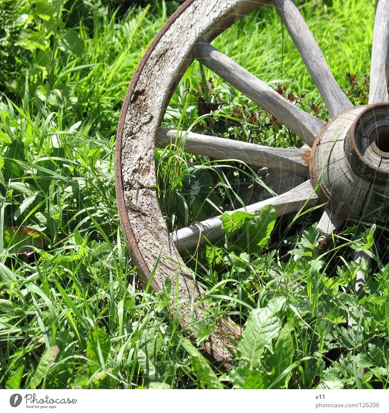 Old wagon wheel Summer Decoration Weather Grass Leaf Meadow Wood Round Brown Green Wheels Carriage Horse and cart Middle Iron Spokes Degrees Celsius Square