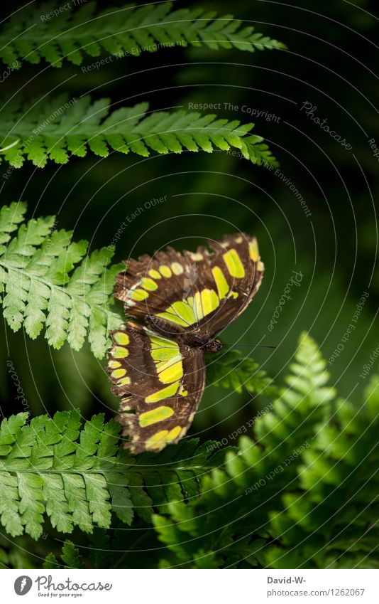 Green Butterfly Nature Plant Animal Sunlight Summer Beautiful weather Fern Park Forest Wing Zoo 1 Discover Relaxation Wait Elegant Exotic Insect Pattern Fragile