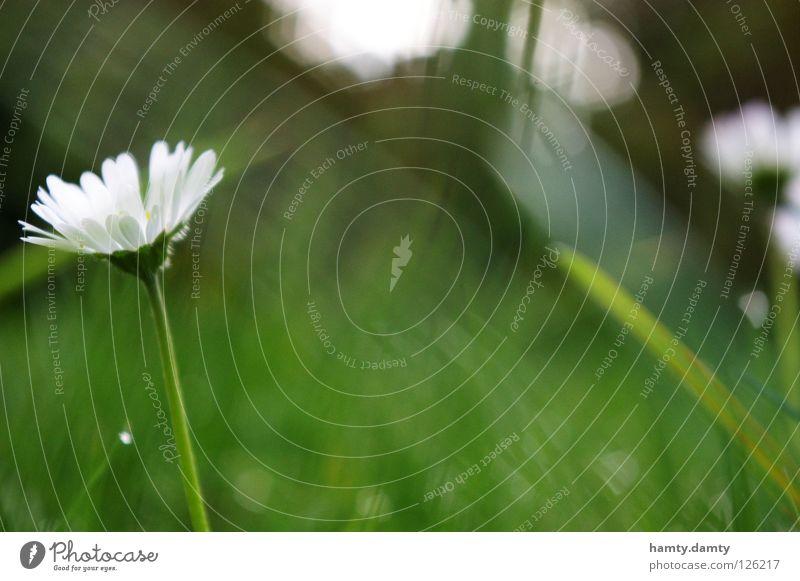 little flowers Daisy Flower Summer Green Meadow Grass sureal Garden
