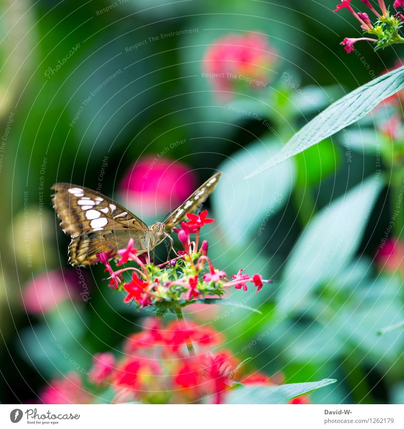 summer messenger Environment Nature Plant Animal Sunlight Spring Summer Beautiful weather Flower Leaf Blossom Foliage plant Garden Park Butterfly Wing Zoo 1