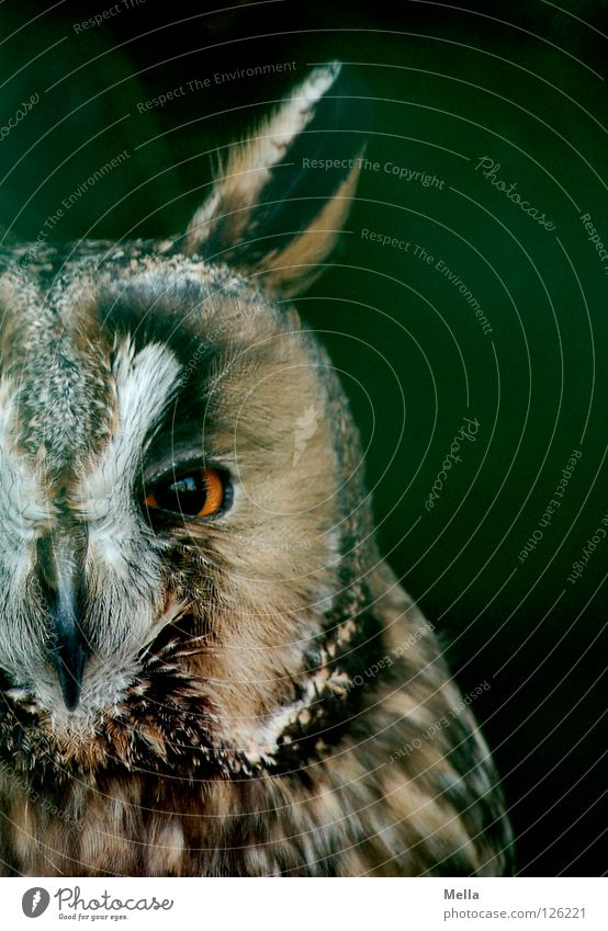 Nature Animal Bird Near Animal face Natural Concentrate Wild animal Direct Half Frontal Owl birds Eagle owl