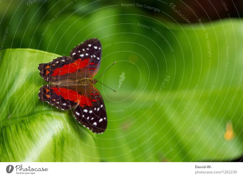 butterfly Environment Nature Plant Animal Spring Summer Leaf Foliage plant Garden Park Meadow Farm animal Butterfly 1 Crouch Insect Virgin forest Wing Red Green