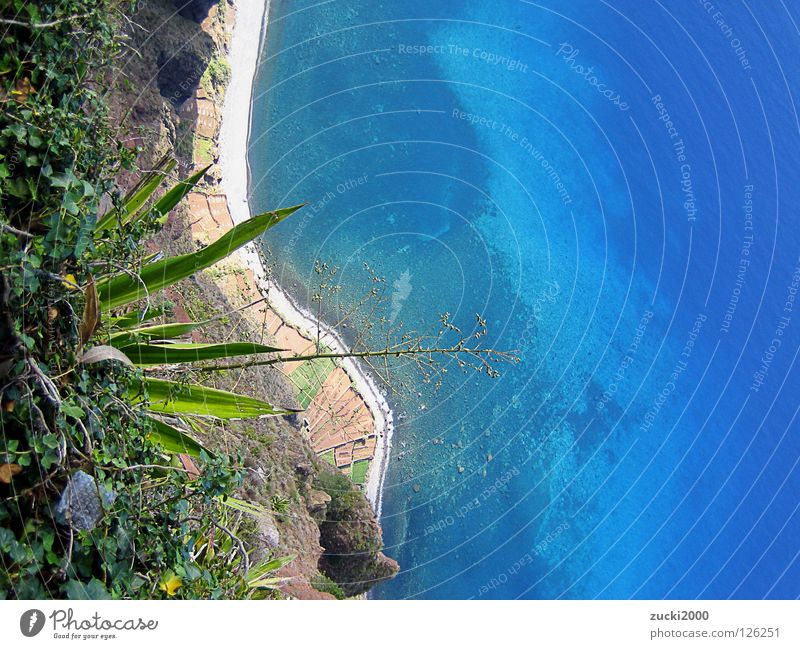 Water Ocean Plant Beach Warmth Coast Physics Clarity Cactus Cliff Sparse Madeira